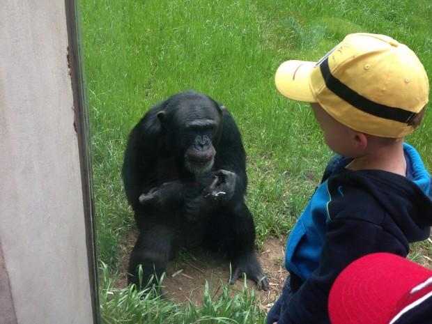 Chimp Affinity