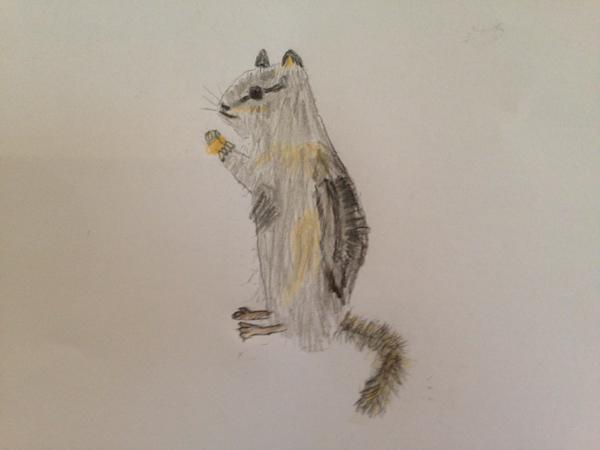 First Place- Rodent Art